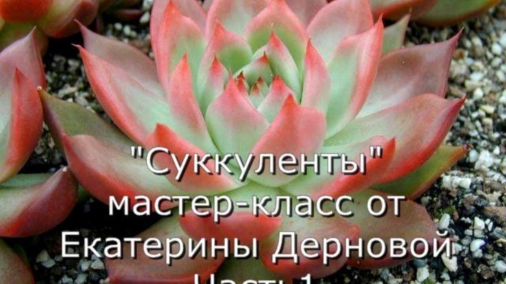 Суккуленты из фоамирана. МК от Екатерины Дерновой. Часть 1