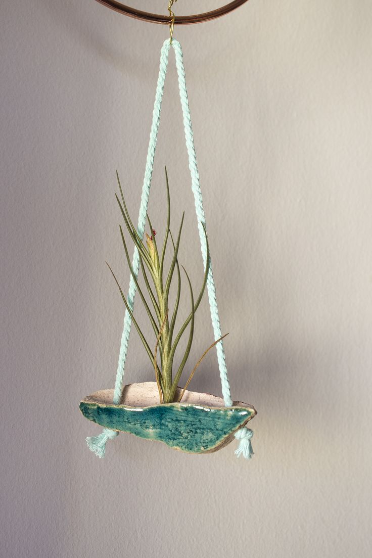 Airplant ceramic wall hanger