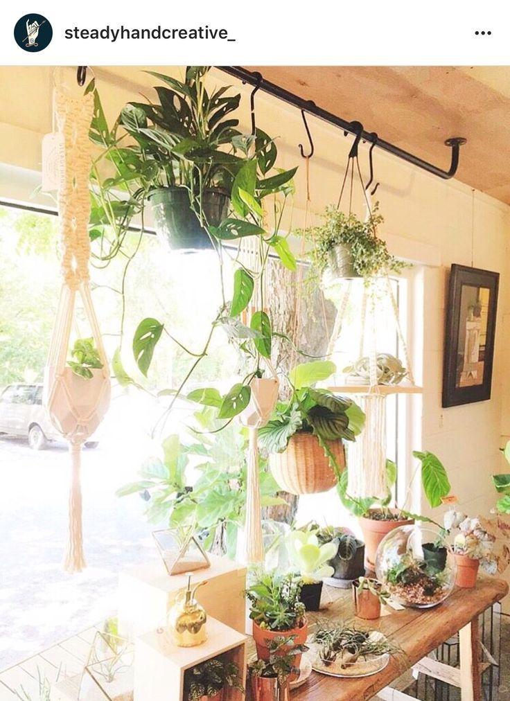 Pflanzen Als Sichtschutz Fenster