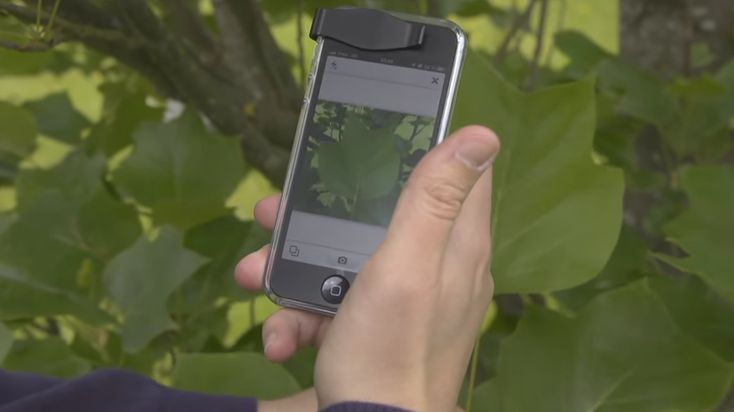 Shazam para plantas: La app que permite identificarlas con solo tomar una foto.
