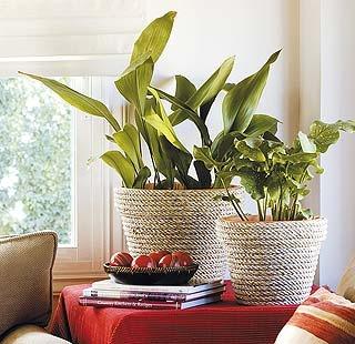 59 best plantas y flores images on pinterest decks - Plantas interior resistentes ...