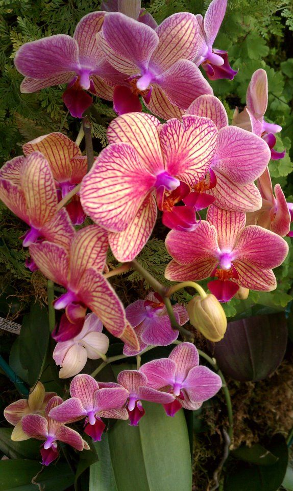 Exotic Orchids... Awesome.