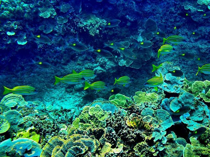 Fish under the sea, Taiping Island / Itu Aba Island in South China sea - by Ho Chien-An