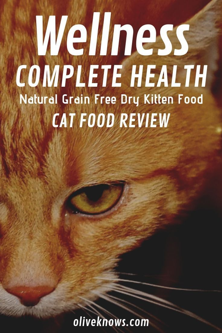 Wellness Complete Health Natural Grain Free Dry Kitten Food Review Oliveknows Kitten Food Cat Food Reviews Wellness Cat Food