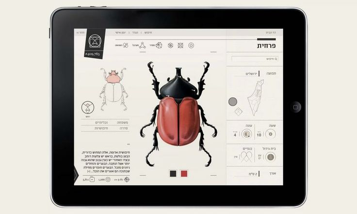 Insect definer. Final project