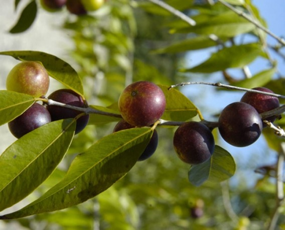 Best Foods To Try With Miracle Berry