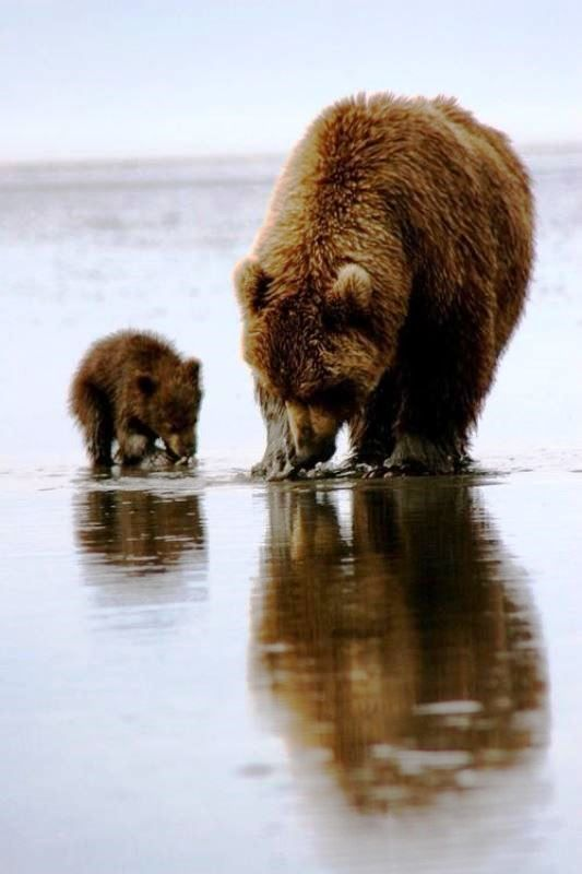 Boz ayı ile bebek beslenirken