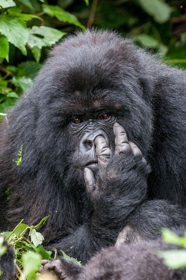Oli Dreike / The Comedy Wildlife Photography Awards