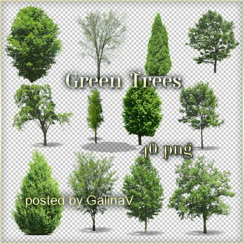 Зеленые деревья - клипарт в PNG