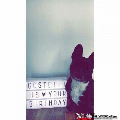Happy 7th Birthday Stella