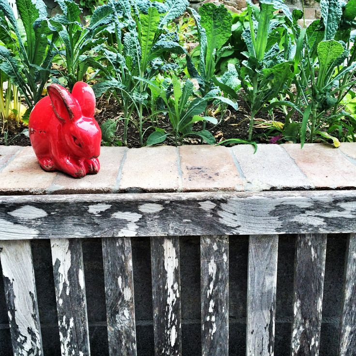 my red bunny guarding our kale…..