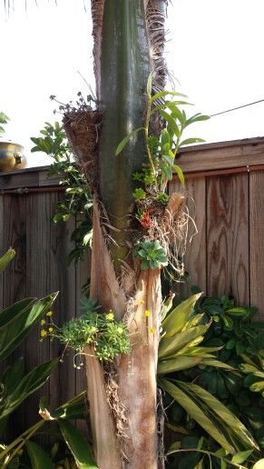 Orchid and succulent tree garden