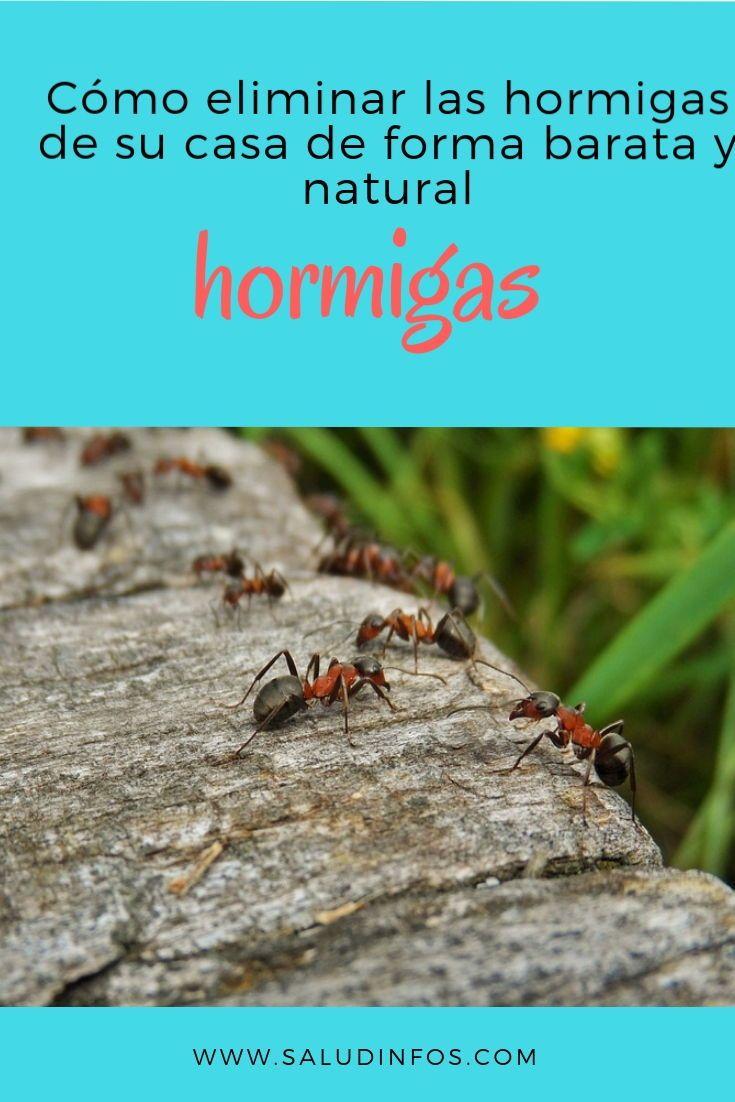 Como Acabar Con Las Hormigas Como Eliminar Las Hormigas De Su Casa De Forma Barata Y Natural