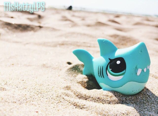 Littlest pet shop shark