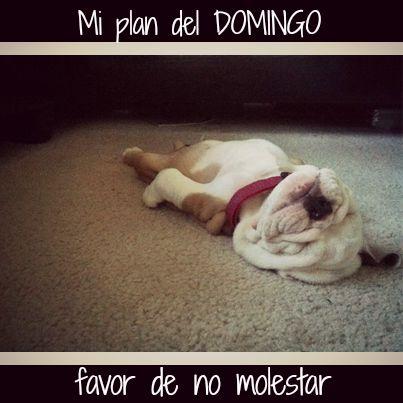 Mi plan del #Domingo... ¡Favor de no molestar! #Citas #Frases @Candidman