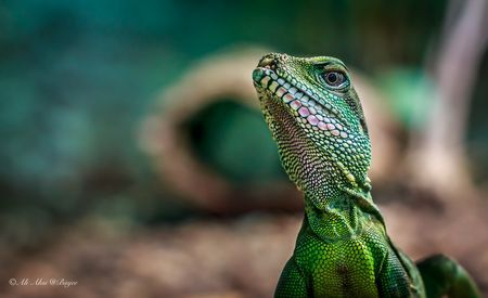 Little Dino Photo by Ali Aksi -- National Geographic Your Shot