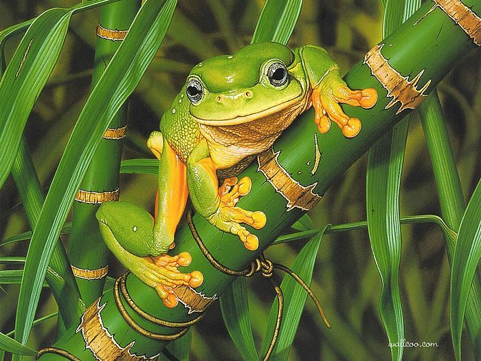 Friendly Frog, Painting by Ego Guiotto. | Aussie Animals ...