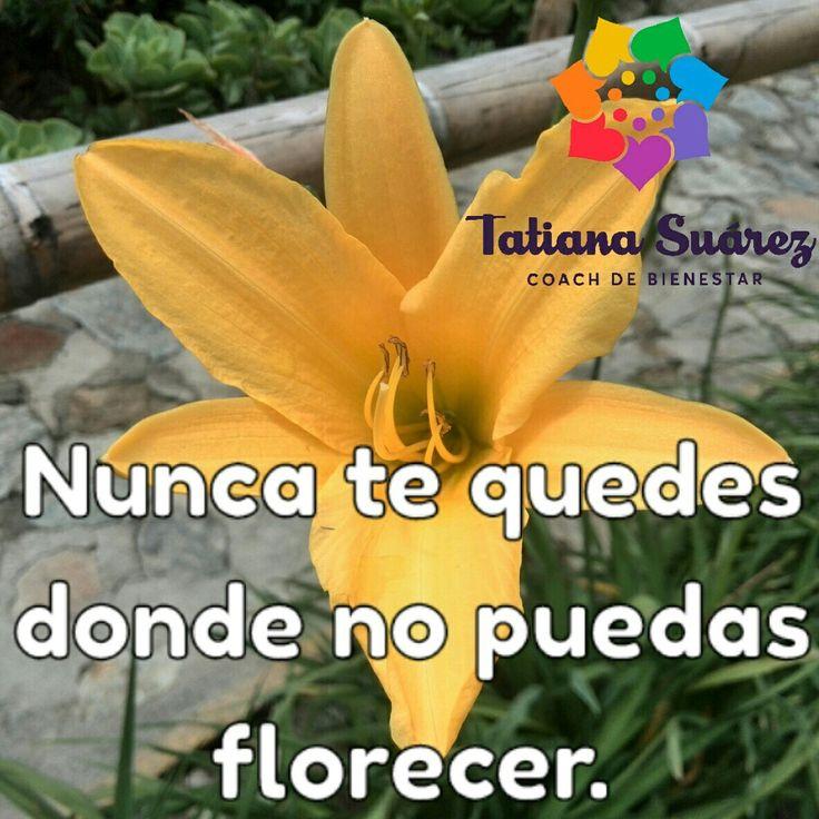 Observa, siente, recoge lo aprendido y fluye!!!   #ElPoderDeLoSimple #SoundHealing  #Ekánta #Reiki #Cristales #Colombia  #SonidoSanador #TatianaSuárezCoach #Medellín #PNL #Coach #Meditación #EntrenandonosParaLaVida #HaciendoLoQueMeGusta
