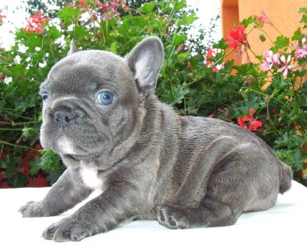 This Frenchy is beautiful!