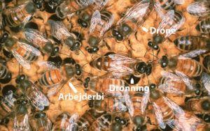 Hvad er en bi? | Biavl.dk