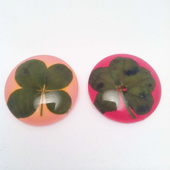 Two Magnets One Real Four Leaf Clover and One Real by GMGCloverCo