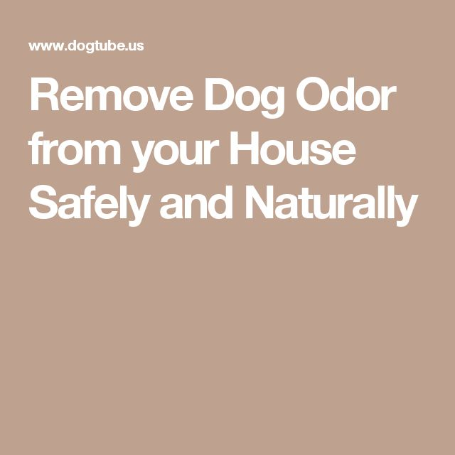best 25 remove dog odor ideas on pinterest pet urine