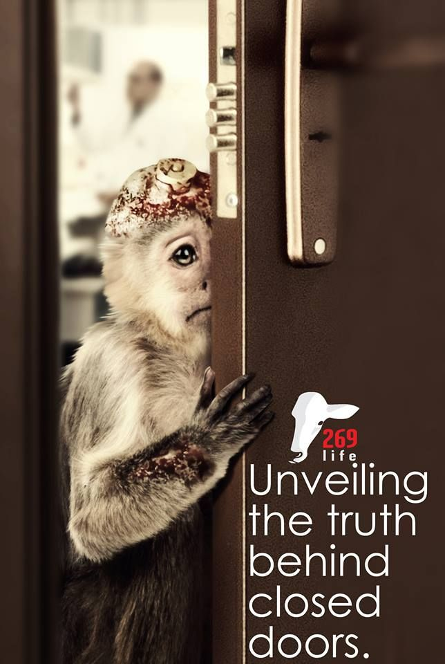 the evils of animal testing Despite the obvious evils that nazis inflicted on the world,  clauberg told his victims that he had used animal sperm to create a monster inside of them.