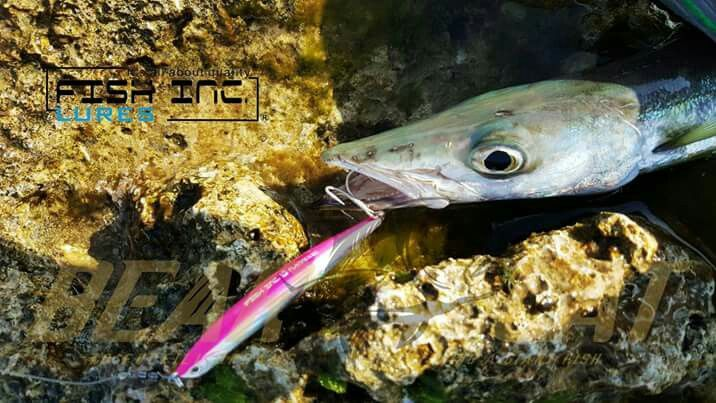 When you using this magic bait, all you need to do is retrieve and jerk, we design this flanker for easy fishing and long casting ability, plus OWNER HOOKS for strongest hooks, everything we trying to do is let our friends enjoy the easiest way to fishing.  One bait with whore day and every species.  Thanks our agent Bear & Cat from Taiwan, and their pro-angler 陳子軒