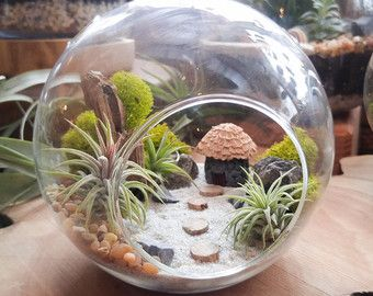 Kit Terrarium plante d'air par fleur de minuit - paysage de bricolage Miniature doté d'une cabane à la main, 3 plantes de l'Air, Driftwood, Lichens et plus