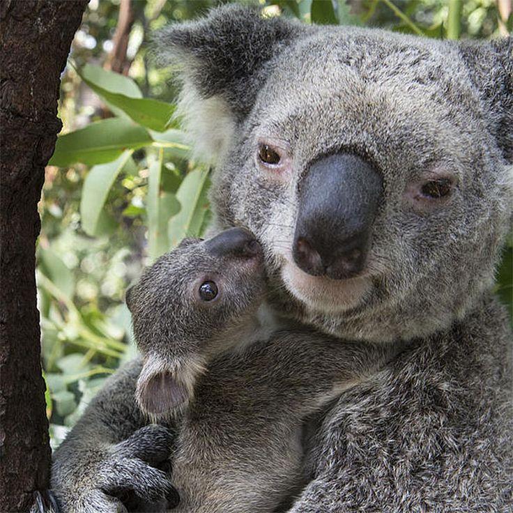 Animal moms   animal moms and baby hero IIHIH