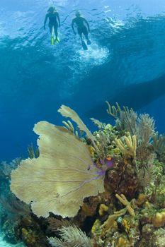Stuart Cove's Snorkel Bahamas Nassau Snorkeling Best Snorkeling Bahamas - Snorkeling Tips