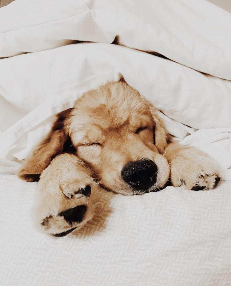 Картинки щенки милые и красивые спящие называется вторичное