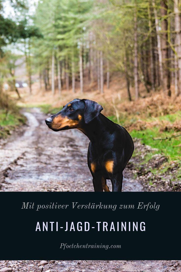 Anti Jagd Training Das Mini Ebook Hundetraining Hunde Erziehen Hunde Korpersprache
