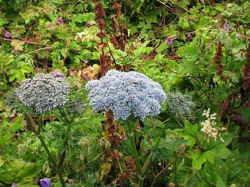 Flower-at-Valley-of-Flowers,-Garhwal-Himalaya-2.jpg (500×375)