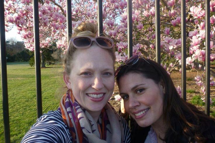 Cherry blossoms, Washington D.C, White house