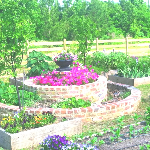 Gardens Ideas, Gardens Outdoor Spaces, Gardensoutdoor Spaces, Outdoor Yards Gardens, Free Gardens, Front Yards, Kitchens Gardens, Alnita Gardens, Circular Gardens
