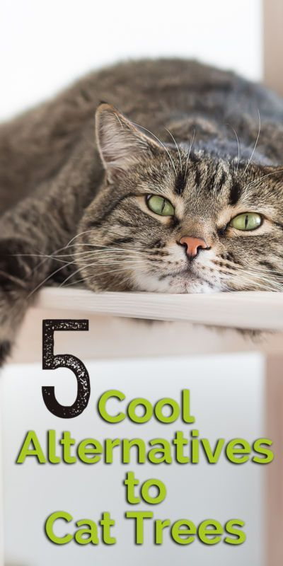 5 cool alternatives to cat trees cat tree cat lovers for Cool cat perches