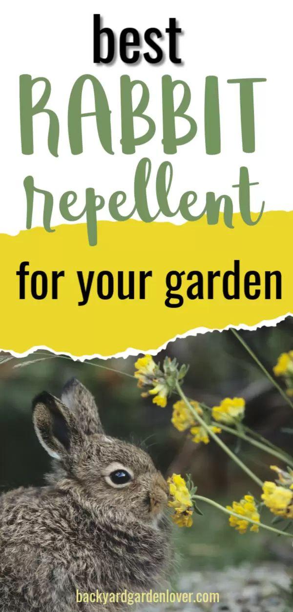 What Is The Best Rabbit Repellent For My Garden? in 2020