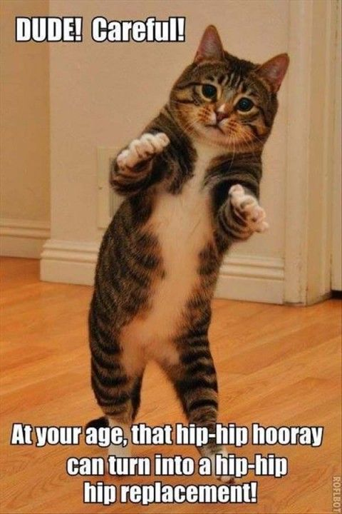 funny quotes and pictures (63 pict) | Funny Pictures