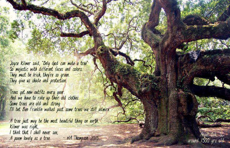 the Angel Oak...only God can make a tree and he made this one a lonnng time ago! #treehugger  #savetheplanet #ecofriendly #ecoliving