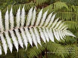 Image result for new zealand native flowers