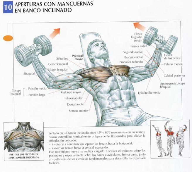 Este ejercicio, intermedio entre el press con barra y las aperturas en banco inclinado, trabaja los pectorales (principalmente los haces claviculares) al mismo tiempo que los flexibiliza. También solicita la porción anterior de los deltoides, el serrato mayor y el pectoral menor.