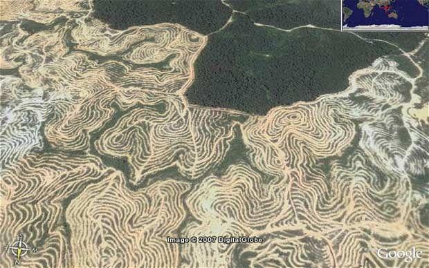 google-palm-oil_1815974i.jpg (620×388)