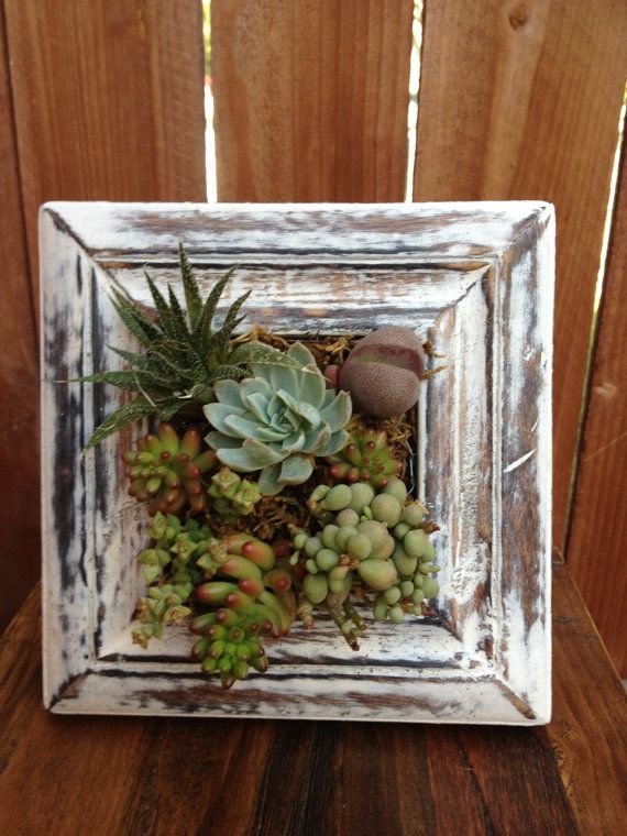 17 best ideas about succulent frame on pinterest succulent wall planter succulent wall and succulent wall gardens