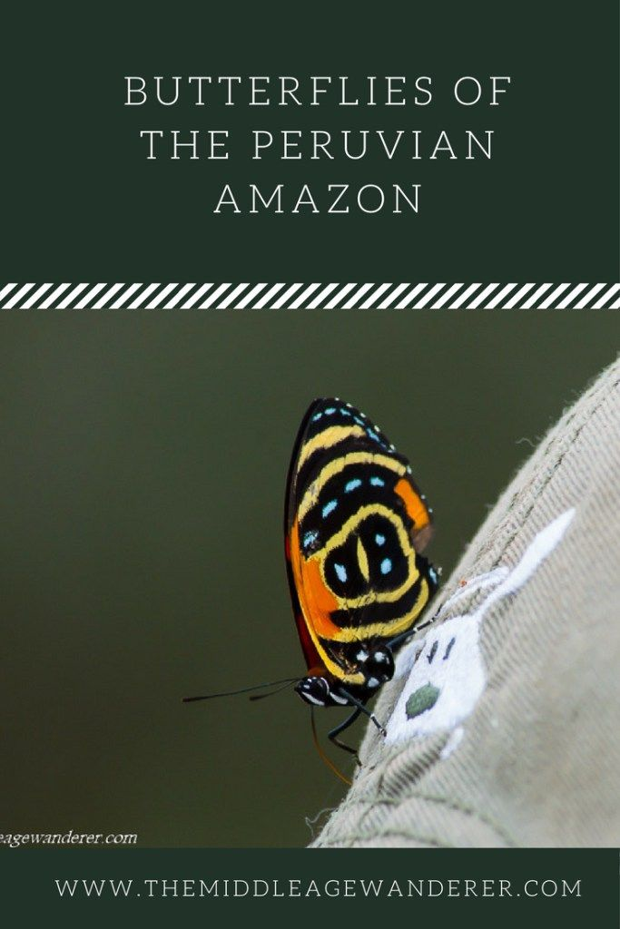 Butterflies in the Peruvian Amazon - The Middle Age Wanderer