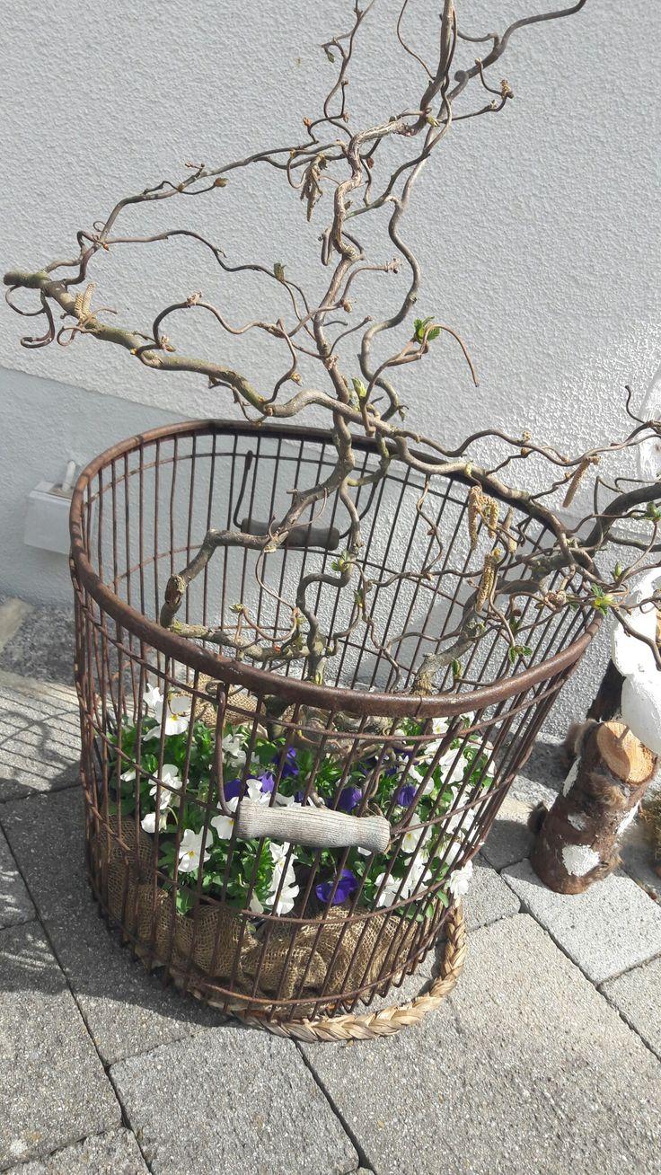 Vintage Einen alten rostigen Metallkorb mit Stiefm tterchen und sten einer Korkenzieherhasel dekoriert Macht sich sch n