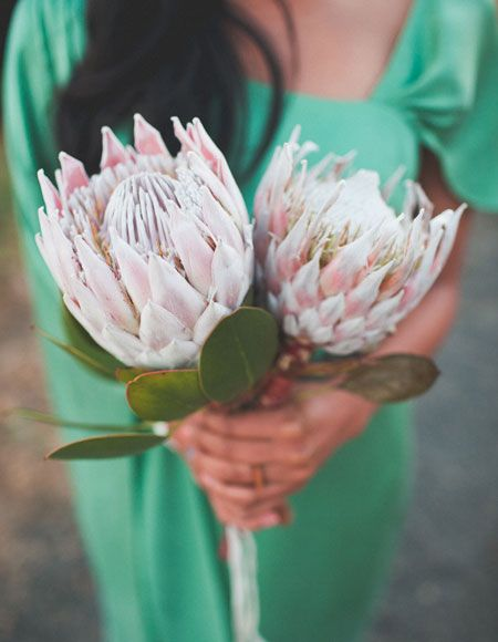 Brides: A Single-Bloom Protea Wedding Bouquet. Love these flowers!