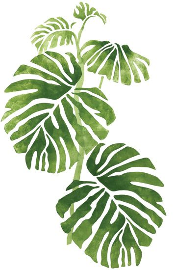 Quickly and easily create a Jungle inspired design in your home with our Rainforest Phildendron 1 Stencil! #Watercolour #Aquarela #Ilustração #Desenho