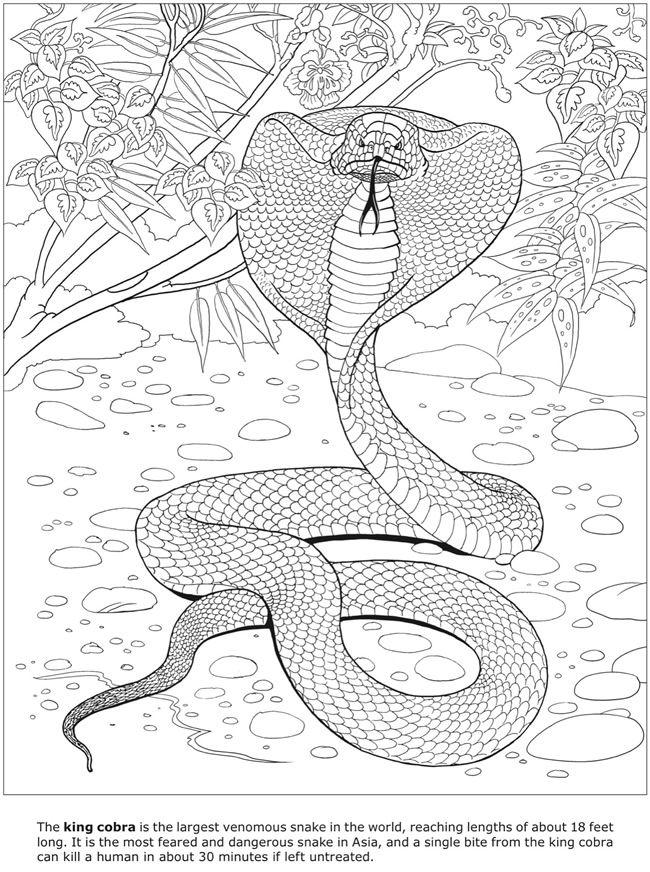 Coloring Pages Of Dangerous Animals : Beste afbeeldingen van d coloring book
