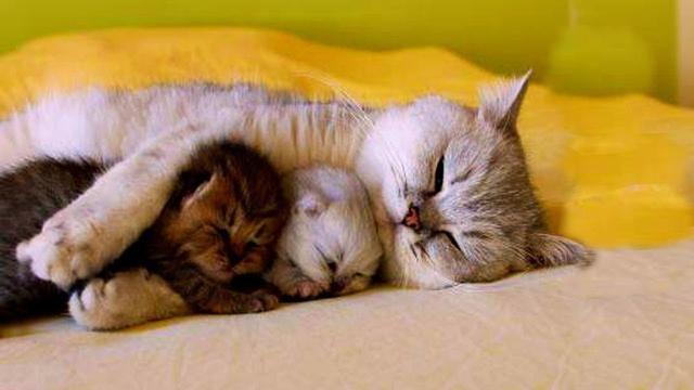 Pet Planet Cute Mother Cats And Her Newborn Kitten Cute Animals